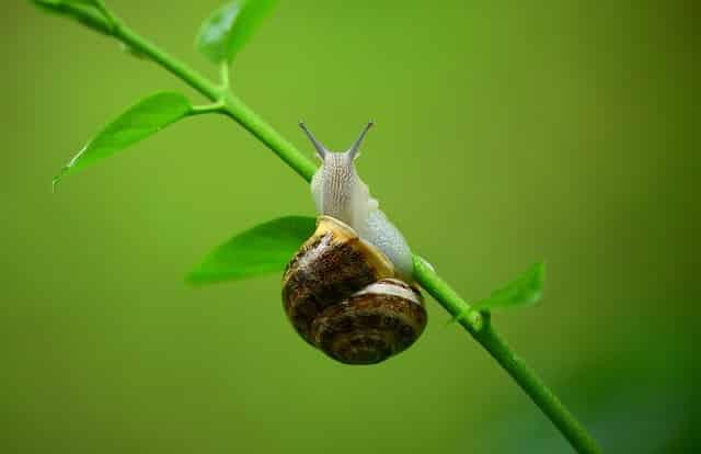 Hvordan et sneglehegn vil redde din have