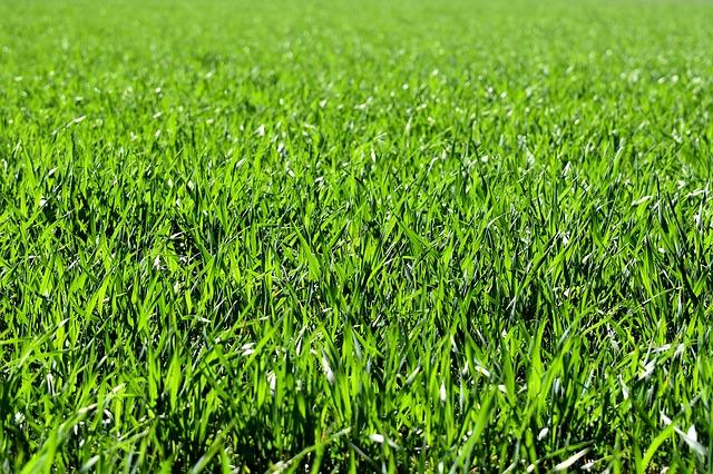 Fordelene ved at anlægge græsarmering i haven