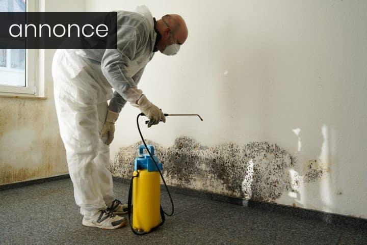 Undersøgelse af skimmelsvamp i din bolig